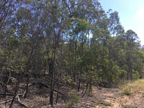 491 Dangore Mountain Road Dangore, QLD 4610